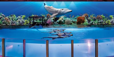 dolphinshow-10-boudewijnseapark.jpg