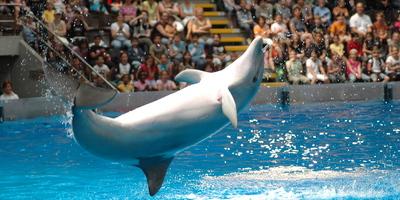 dolphinshow-12-boudewijnseapark.jpg