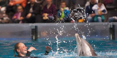 dolphinshow-11-boudewijnseapark.jpg