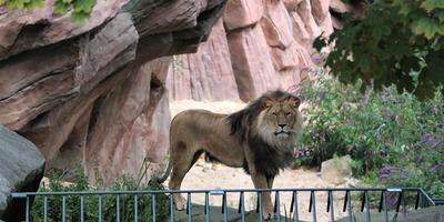 lion-4844892_1920.jpg